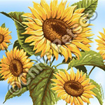 sunflowers souvenir gift products