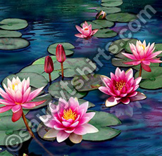 waterlily illustration by Chris Petsos